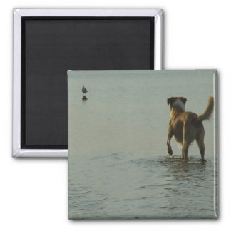 Border Collie - Tipper and Seagull Magnet