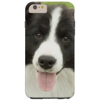Border Collie Tough iPhone 6 Plus Case