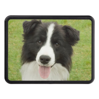 Border Collie Tow Hitch Covers