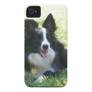 Border Collie Tshirts iPhone 4 Case-Mate Case