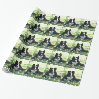Border Collie Tshirts Wrapping Paper