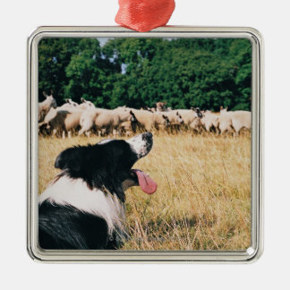 Border Collie Watching Sheep Metal Ornament