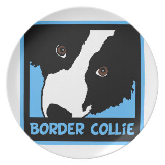 border collie watching you ewe plate