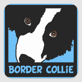 border collie watching you ewe square sticker