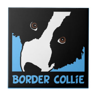 border collie watching you ewe tile