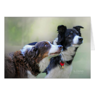 Border Collies Card