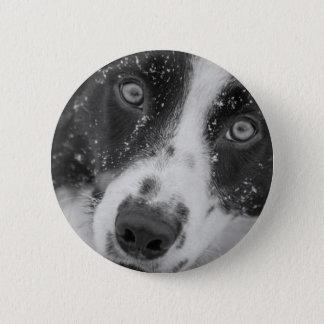 Border Collie's First Snow 2 Inch Round Button