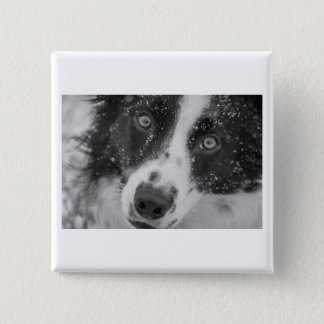 Border Collie's First Snow 2 Inch Square Button