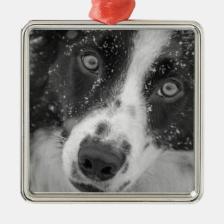 Border Collie's First Snow Metal Ornament