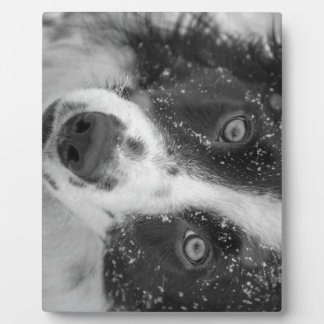 Border Collie's First Snow Plaque