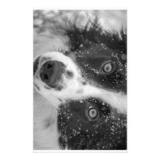 Border Collie's First Snow Stationery