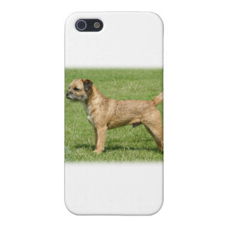 Border Terrier 9Y046D-035 iPhone 5/5S Cover