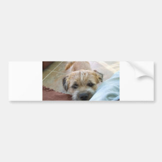 border terrier begging bumper sticker
