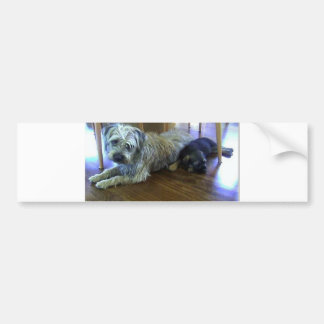 Border_Terrier_brothers2 Bumper Sticker