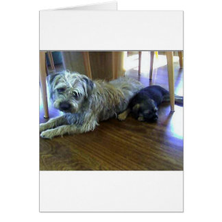 Border_Terrier_brothers2.png Card