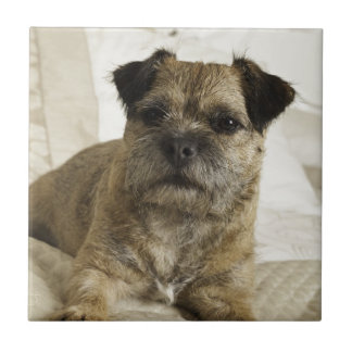 Border Terrier Ceramic Tile