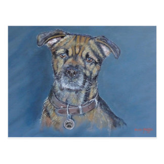 Border terrier dog pet portrait fine art print postcard