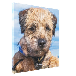 Border Terrier Puppy Portrait Canvas