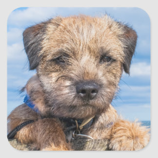 Border Terrier Sticker