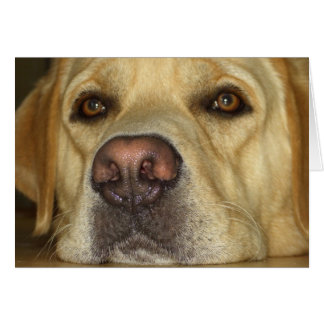 Boredom - Cute Yellow Labrador Card