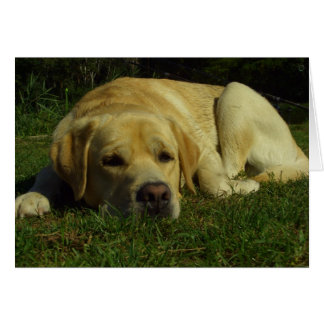 Boredom - Labrador in green grass Card