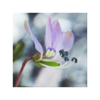 Born to be wild. Fringed Spider Flower Canvas Print