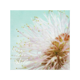 Born to be wild. Mimosa Pudica or touch me not Canvas Print