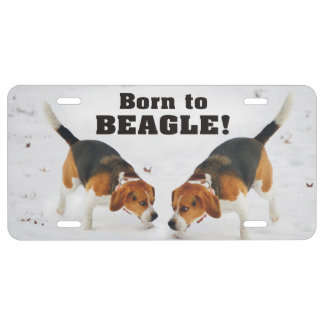 Born To Beagle In the Snow License Plate