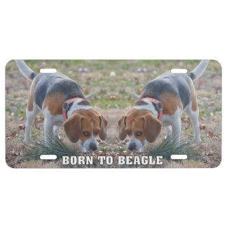 Born to Beagle License Plate