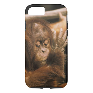 Borneo. Captive orangutan, or pongo pygmaeus. iPhone 7 Case