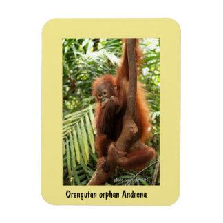 Borneo Orangutan Orphan: Save Wildlife Magnet