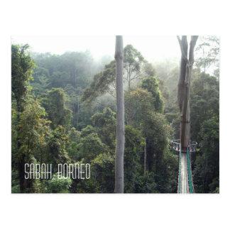 Borneo Rainforest Jungle Treetops Landscape Photo Postcard