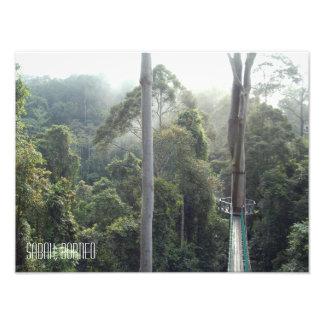 Borneo Rainforest Jungle Treetops Sabah Photo Print