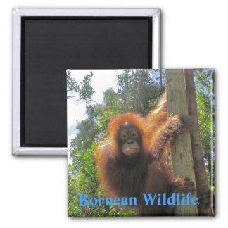 Borneo  Wildlife Magnet