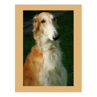 Borzoi dog beautiful photo postcard