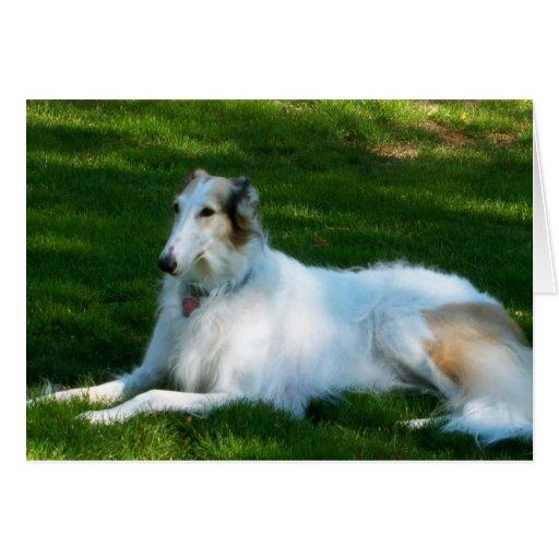 """Borzoi"" Dog Photo Greeting Card"