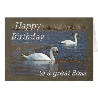 Boss Birthday - Mute Swans on Winter Pond Card