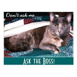 Boss Kitty postcard