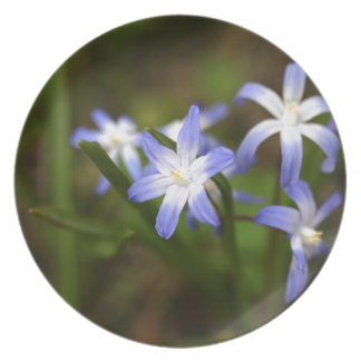 Bossiers glory of the snow flower plates