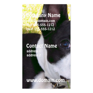 boston-terrier-1 pack of standard business cards