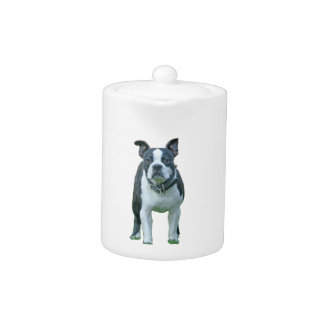 Boston terrier  1b
