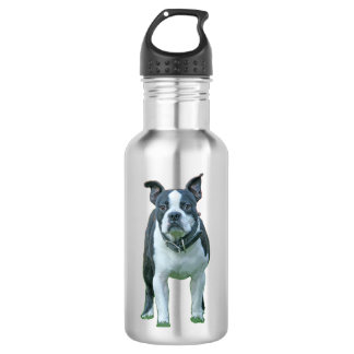 Boston terrier  1b 532 ml water bottle