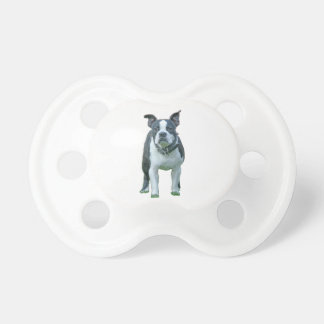 Boston terrier  1b baby pacifiers