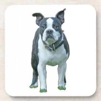 Boston terrier  1b coaster