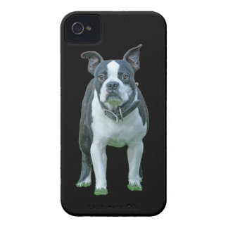 Boston terrier  1b iPhone 4 covers