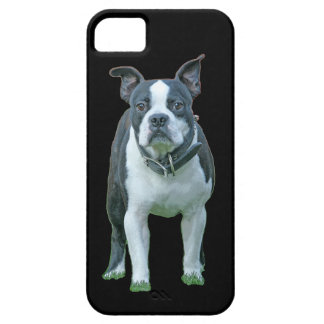 Boston terrier  1b iPhone 5 cover