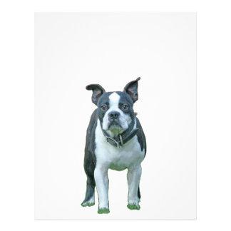 Boston terrier  1b letterhead