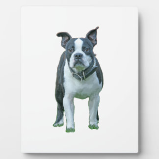 Boston terrier  1b plaque