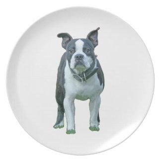 Boston terrier  1b plate
