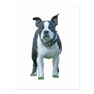 Boston terrier  1b postcard
